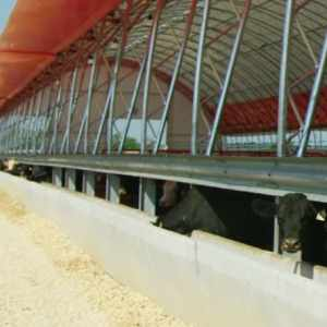 65′ x 530′ Beef Barn Feedlot