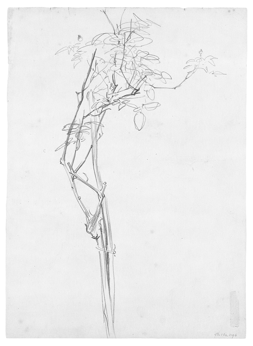 medium resolution of rose branch study for carnation lily lily rose