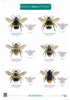 OP119-Bees