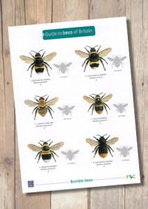 OP119b-Bees