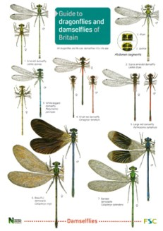 OP53-Dragonflies