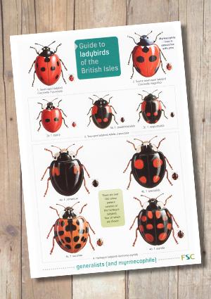 OP102b-Ladybirds