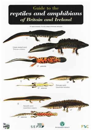 OP55-ReptilesAmphibians