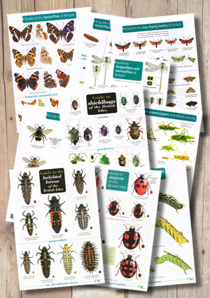 BB10PACKb-InsectIDCollection