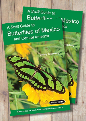 A Swift Guide to Butterflies of Mexico and Central America (2nd Edition)
