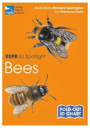 RSPB ID Spotlight - Bees