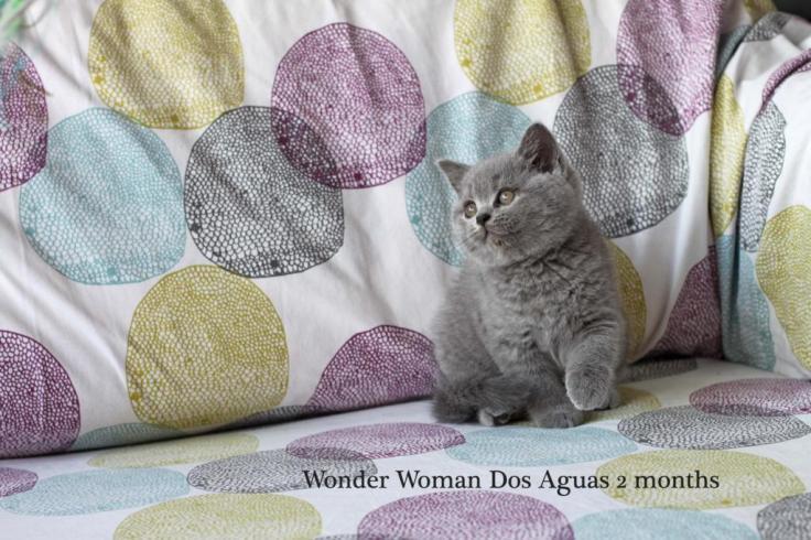 W1 WONDER WOMAN DOS AGUAS