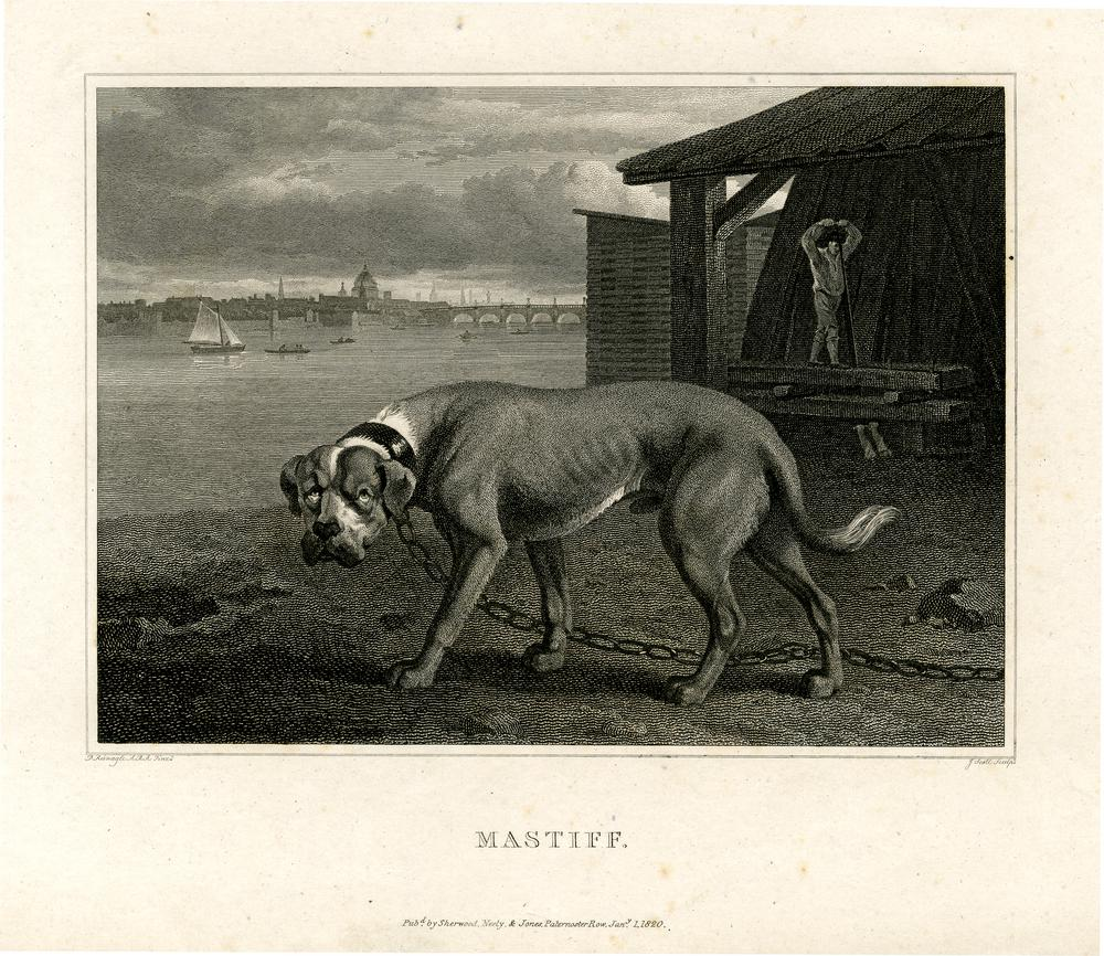 """A mastiff dog standing to left in a chained collar in a yard beside the Thames, a man working outside a building behind at right, bridge and the dome of St Paul's in the distance; illustration to """"The Sportsman's Repository, or a Correct Delineation of th"""