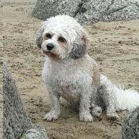 Dog on Brittany beach