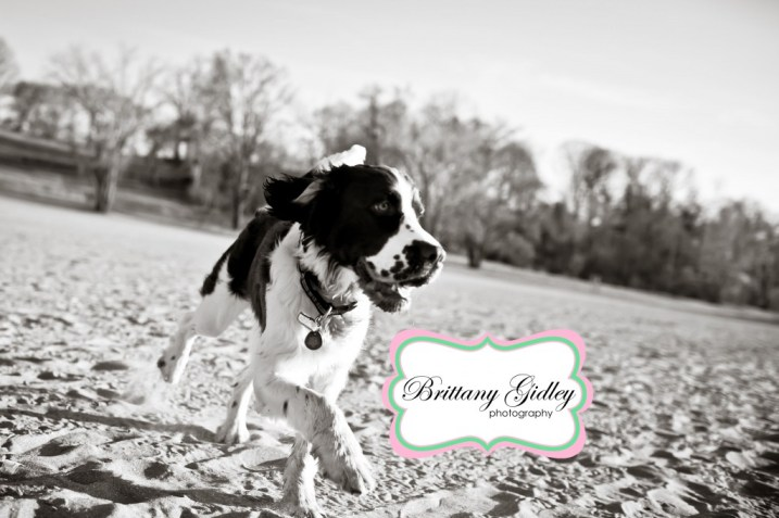 Puppy Photographer | Brittany Gidley Photography LLC
