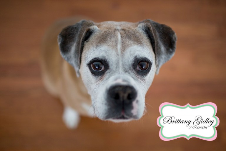 Boxer | Dog | Pet Photography | Start With The Best | Brittany Gidley Photography LLC