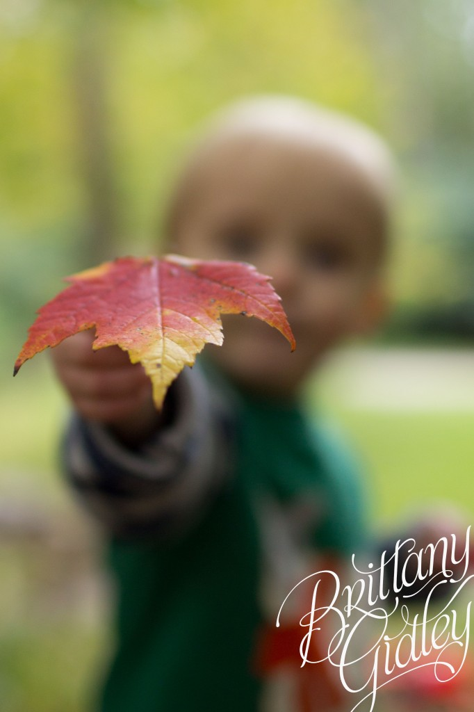 Autumn | Olmsted Falls Ohio | Fall | Brittany Gidley Photography LLC