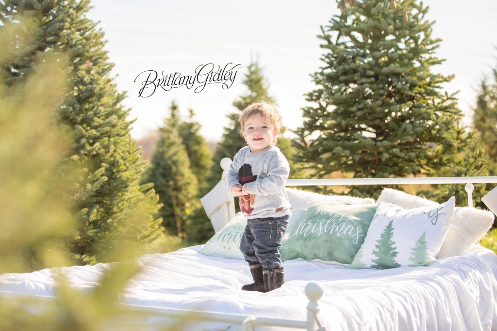 Tree Farm Dream Mini Sessions-13