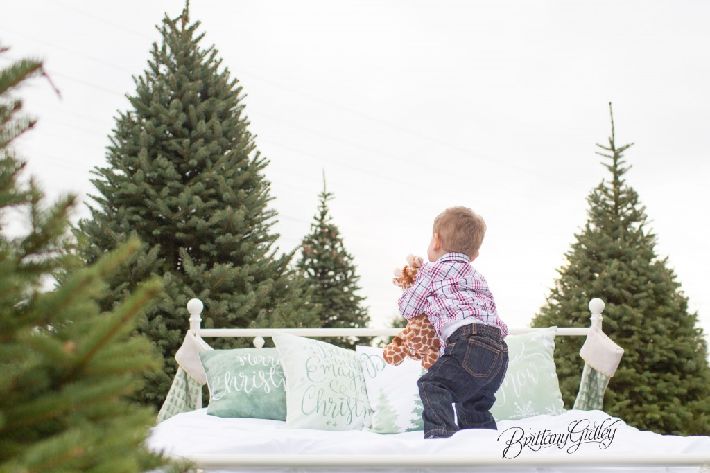 Tree Farm Dream Mini Sessions-37