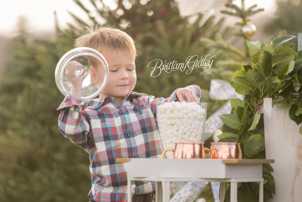 Tree Farm Dream Mini Sessions-6