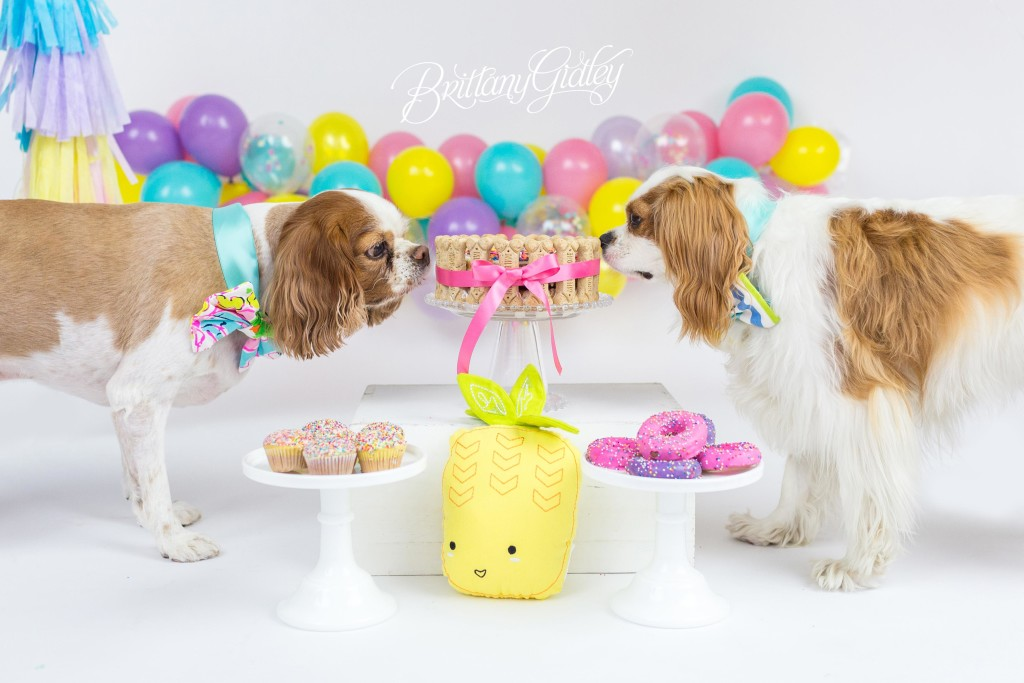 Dog Cake Smash | Cleveland Dog Photographer