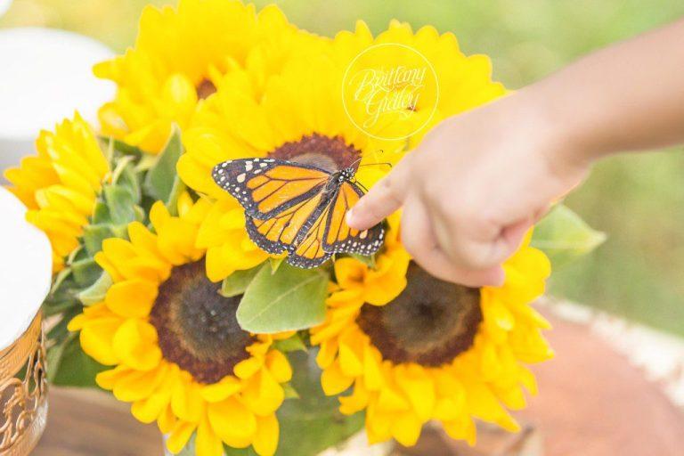Dream Session | Tea Party | Butterflies | Wanderlust | Child Photographer | Cleveland Ohio