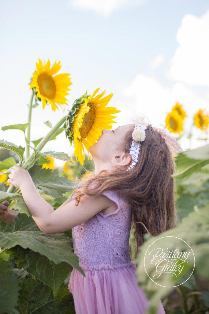 Prayers From Maria Sunflower Field | Avon Ohio | Sunflowers | Flower Field