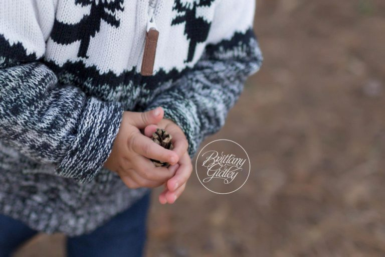 Dream Mini Session | Pinecone | Winter Wonderland