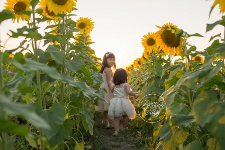 Bay Village Child Photographer | Prayers From Maria Sunflower Field | Sunflower Field Avon Ohio | Whimsical Child Photography