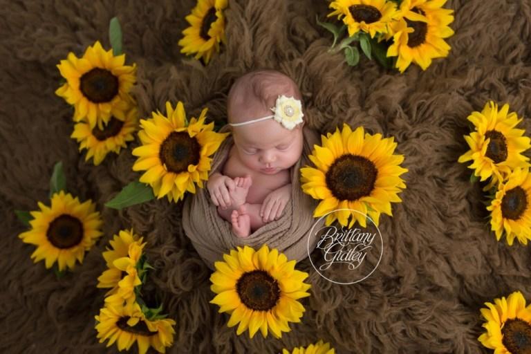 Rocky River Newborn Photography   Rocky River Newborn Photographer   Sunflower Newborn Photos   Newborn Baby Girl Sunflower   Brittany Gidley Photography LLC   Rocky River, Ohio