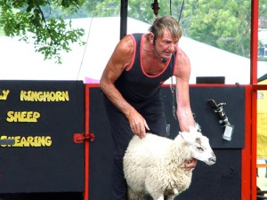Sheep shearing at the Lambeth Country Show