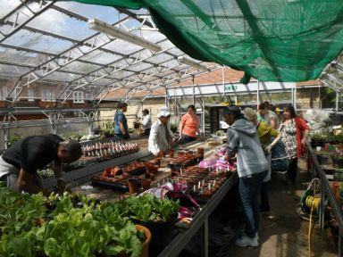 Myatt's Fields Park: the greenhouse in action