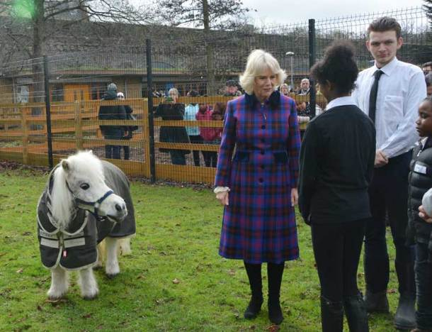 Meeting Pedro the pony