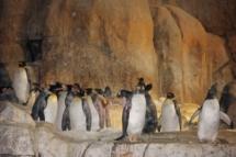 HD Zoo Aquarium 05
