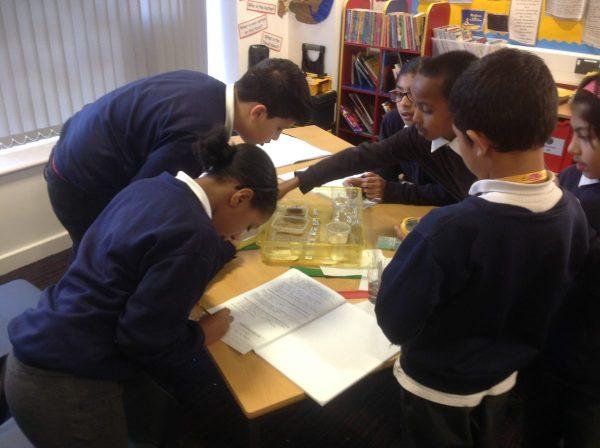 5r Science Work Broad Heath Primary School