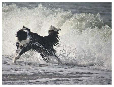 23 08 2011 – Und das Meer hat doch Zähne ...