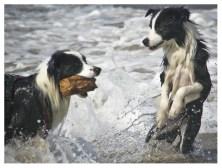25 08 2011 – Seehunde (IV)