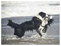 28|08|2011 – Spielende Hunde (I)