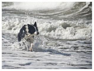 28|08|2011 – Spielende Hunde (IX)