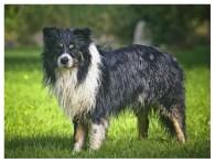 19|08|2012 – Wenn es dem Esel zu wohl wird, geht er … baden