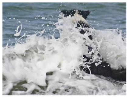 13|05|2012 – Splish, splash … she was taking a bath …