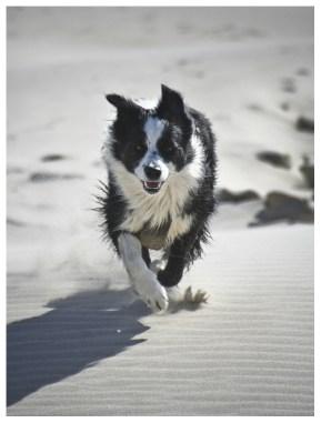 07 05 2012 – Strandläufer