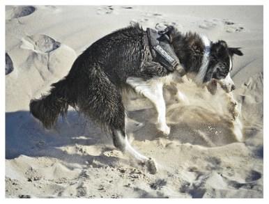 08|05|2012 – Springteufel im Sand