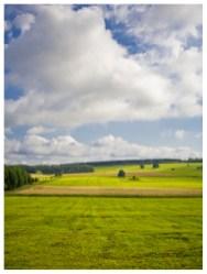 02|08|2012 – Lieblingswiesen (zwischen Höhn und Hellenhahn-Schellenberg)