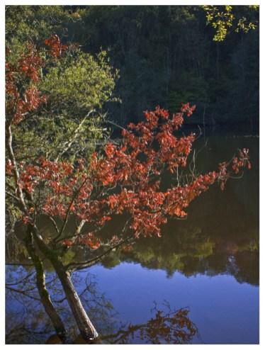30|09|2012 – Herbstliches Farbenspiel an der Kotzenrother Lay