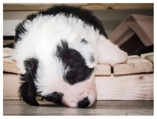 16 12 2012 – Beim Spielen eingeschlafen: »Liv«