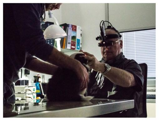 03 01 2013 – Ophthalmoskopie bei Dr. Köhler