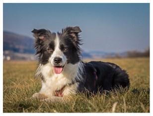 27 03 2013 – Grüne Wiesen, blauer Himmel: Glücklicher Hund!