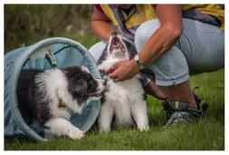 07|09|2013 – Zum ersten Mal auf dem Hundeplatz