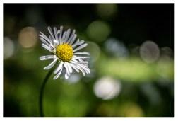 13|07|2013 – Im Garten