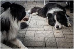 05|05|2014 – »Buddy« und »Ida«