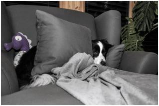 13|11|2014 – Kissen, statt Brücke: Lou liegt auch mit 2 am liebsten drunter