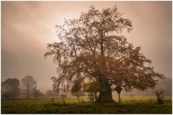 19|10|2014 – Hohle Buche bei Oberrod
