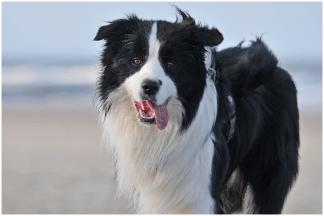 Winterurlaub am Strand: »Joey« (Broadmeadows Black Diamond)