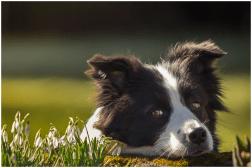 11 03 2015 – Ida wartet auf den Frühling